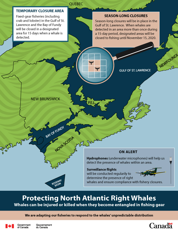 Protecting North Atlantic right whales. Credit: Fisheries and Oceans Canada.